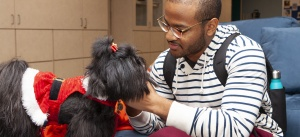 Pet therapy -- Passion